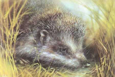 Тваринки - листівки та привітання, #74