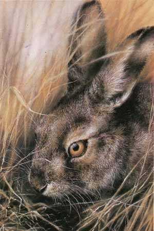 Тваринки - листівки та привітання, #76