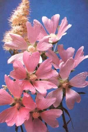 Квіти - листівки та привітання, #83
