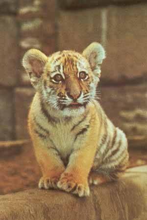 Тваринки - листівки та привітання, #84