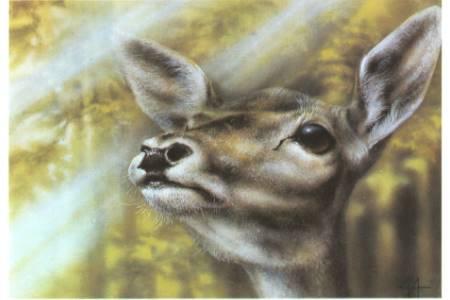 Тваринки - листівки та привітання, #249
