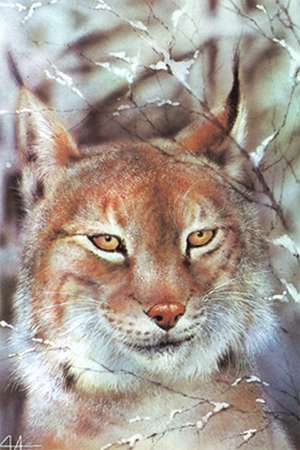 Тваринки - листівки та привітання, #251