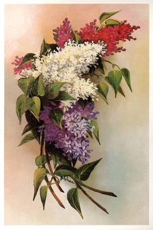 Квіти - листівки та привітання, #315