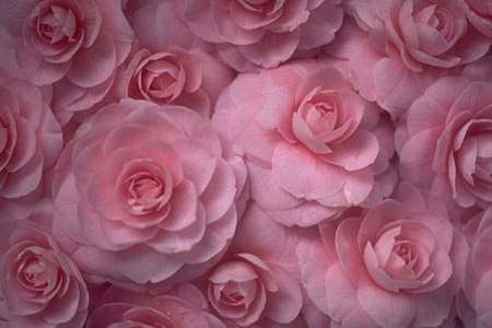 Квіти - листівки та привітання, #410