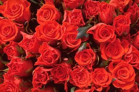 Квіти - листівки та привітання, #411